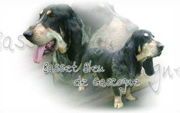 Basset Bleu De Gascogne