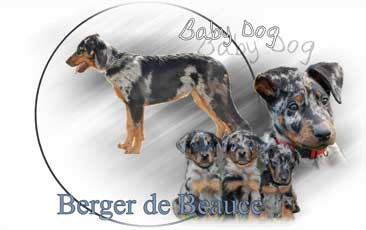 Berger De Beauce