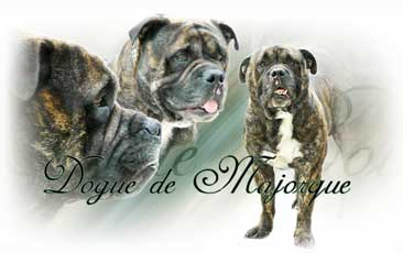 Dogue De Mayorque