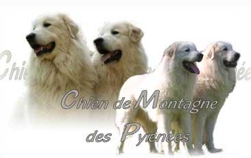 Montagne Des Pyrenees