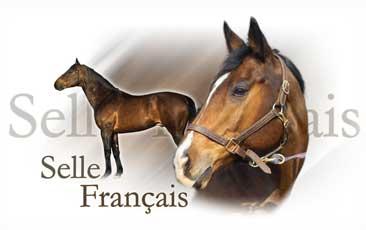 Selle Francais