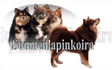 Suomenlapinkoira