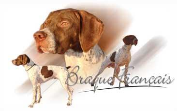 Braque Francais