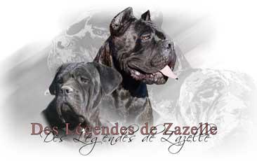 Elevage de cane corso des Légendes de Zazelle