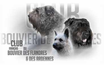 Boutique du club du bouvier des Flandres et des Ardennes
