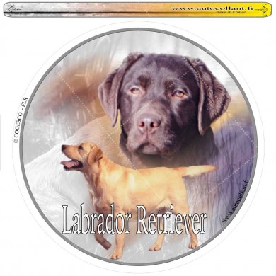 Autocollant  labrador retriever chocolat circulaire