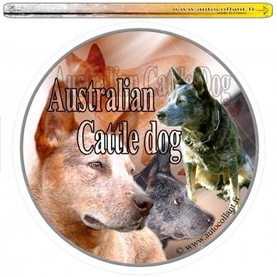 Autocollant australian cattle dog circulaire