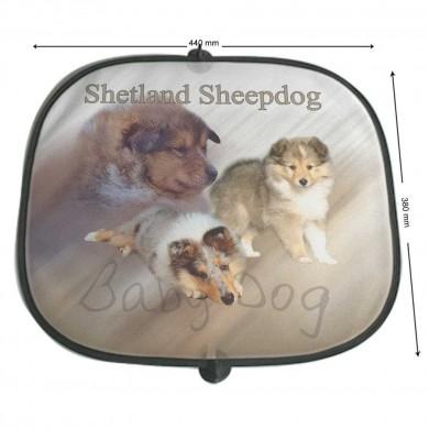 Pare soleil Chien  shetland sheepdog baby dog