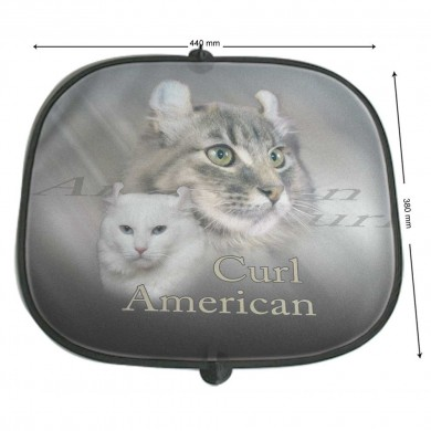 Pare soleil Chat american curl