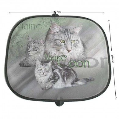 Pare soleil Chat main coon