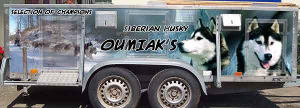 Remorque de transport pour chien décorée avec un autocollant de husky