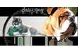articles et accessoires canin