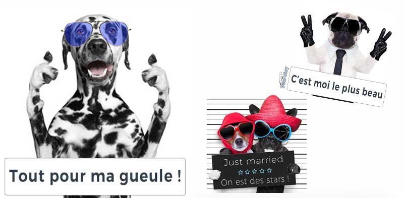 Personnalisation d'articles de chiens et chats