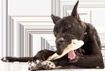 nourriture pour chien naturelle hypoallergénique