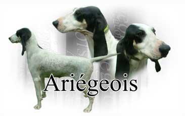 Ariegeois