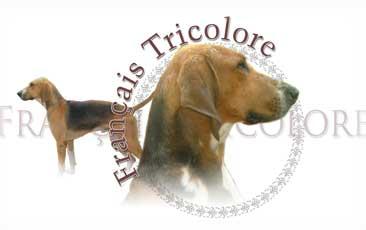 Francais Tricolore