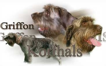Griffon Korthal