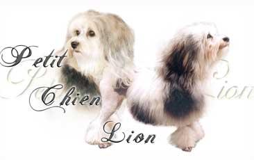 Petit Chien Lion