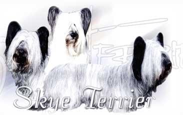 Skie Terrier