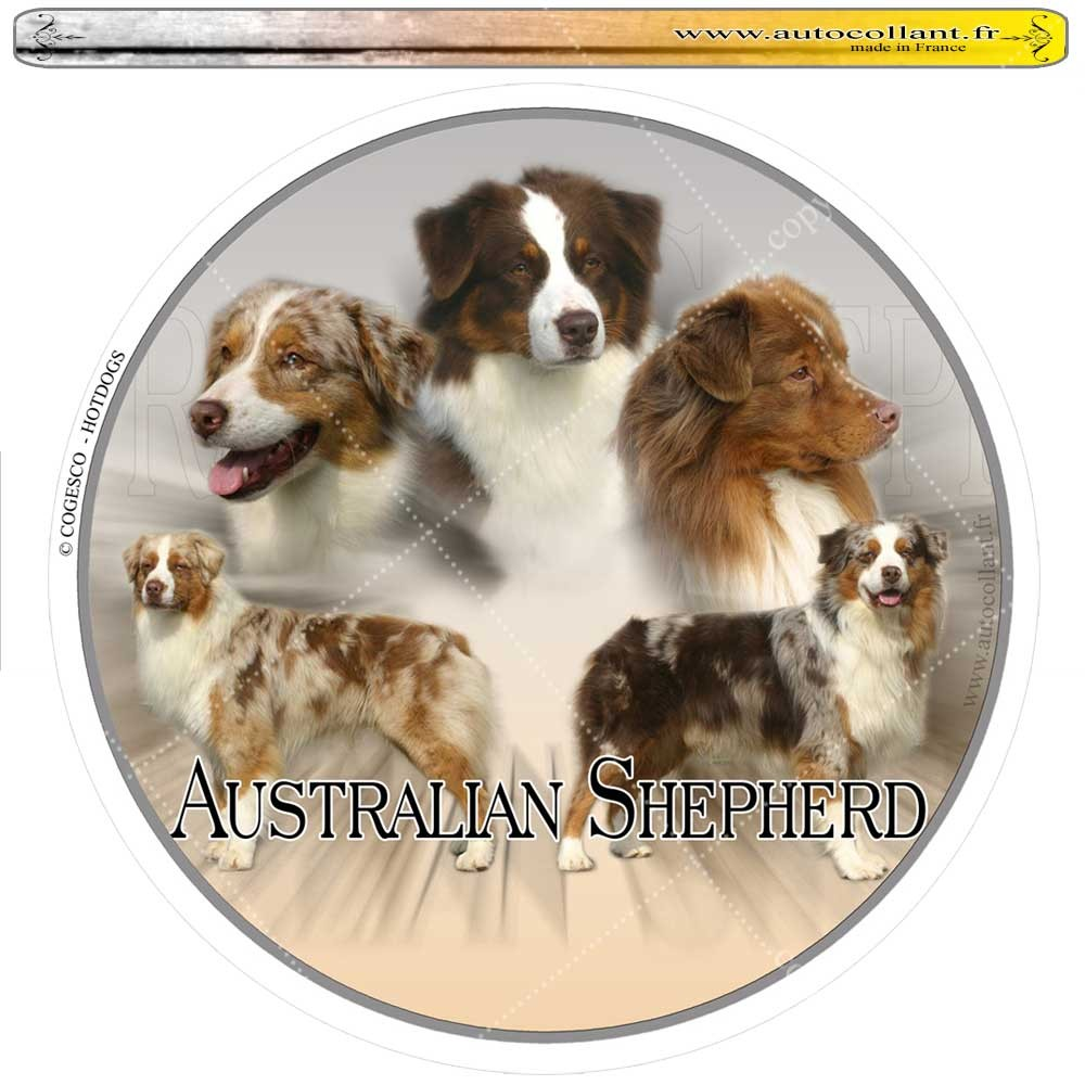 Autocollant australian shepherd rouge circulaire