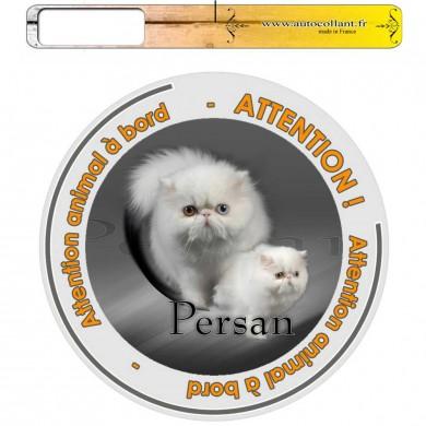 Autocollant Chat à bord de persan blanc