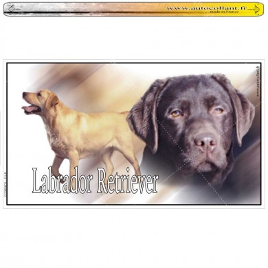 Stickers autocollant  labrador retriever chocolat