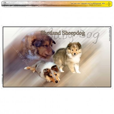 Stickers autocollant  shetland sheepdog baby dog