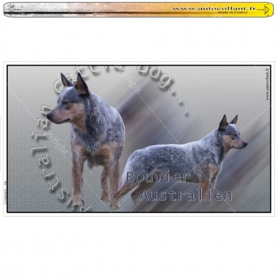 Stickers autocollant australian cattle dog 01