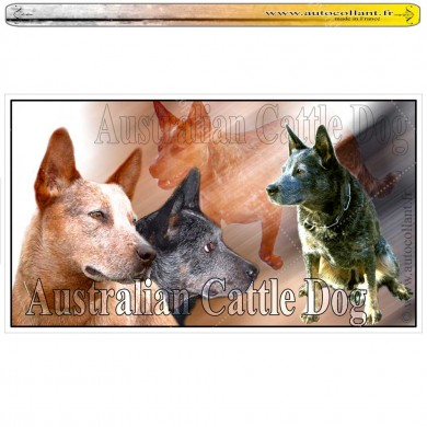 Stickers autocollant australian cattle dog