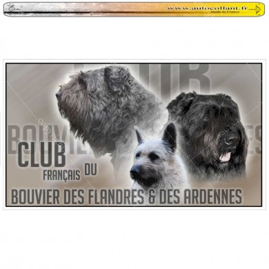 club bouvier des flandres sur Autocollants panoramiques