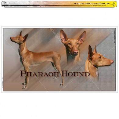 Stickers autocollant pharaoh hound