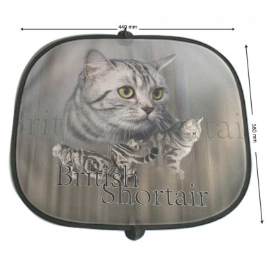 Pare soleil Chat british shortair brunge