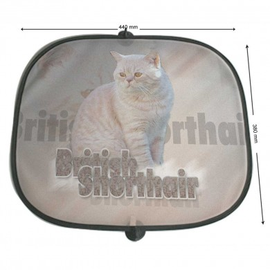 Pare soleil Chat british shortair fauve