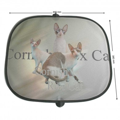 Pare soleil Chat cornish rex cat