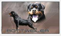 Autocollant chien pour voiture Rottweiler