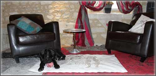 couchage pour chien avec un chiot cane corso