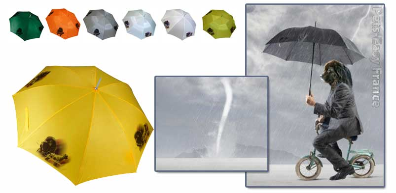 Avis de tempête sur les parapluies animaux de compagnie