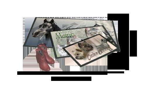 Des tapis de chevaux pur sang arabe, chat main coon et chien cairn terrier