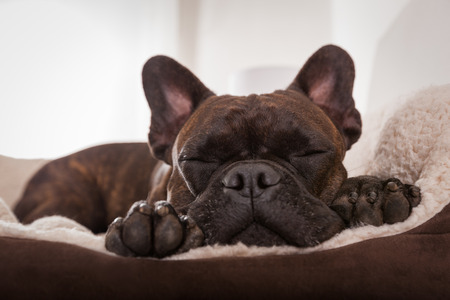 un chien qui dort dans son dodo