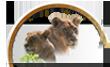 produits et articles animaux sauvages