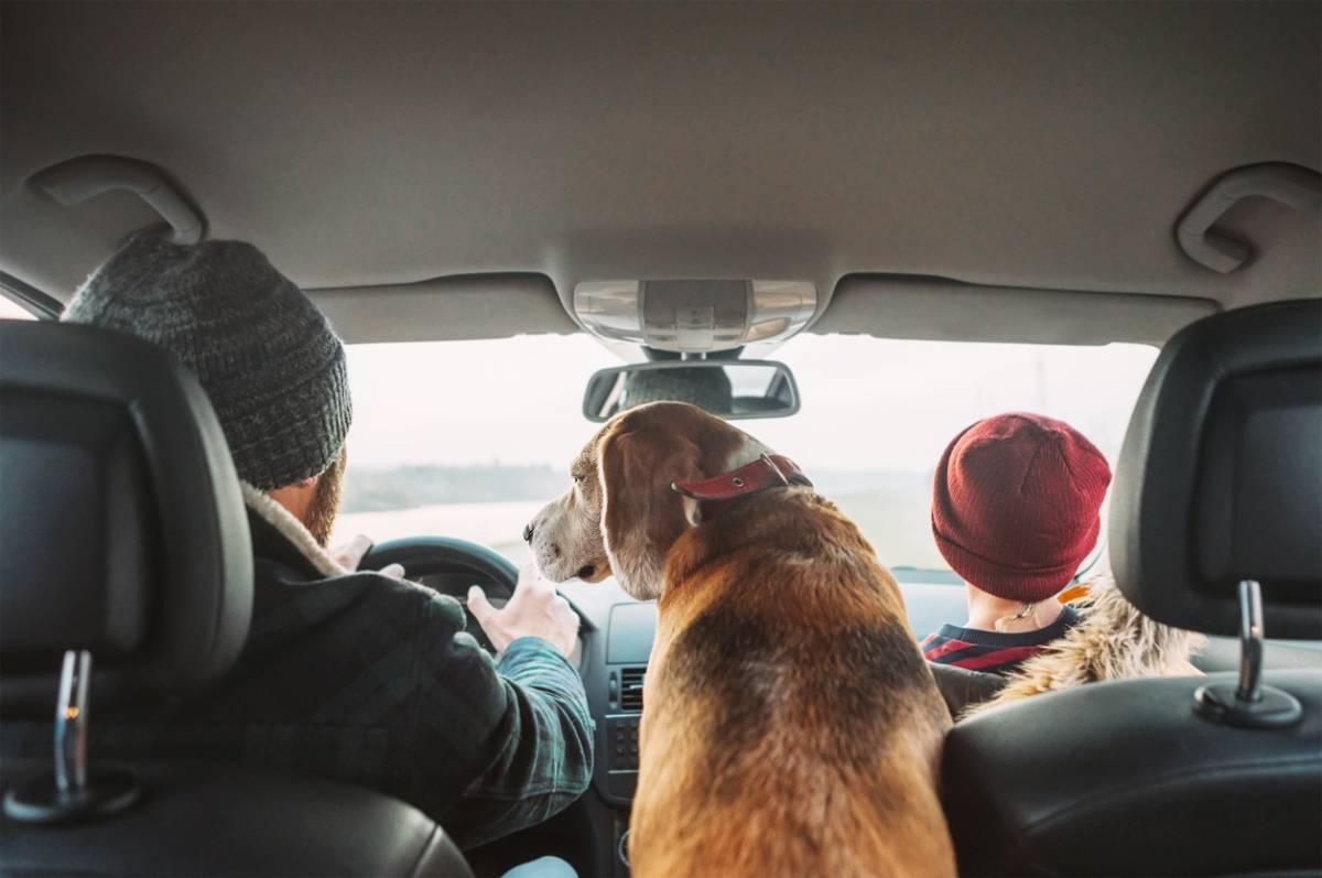 Promenade et voyage avec le chien