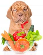 les croquettes, un argument de santé pour votre chien