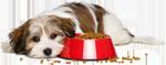 les bonnes idées et conseil sur les croquettes pour chien de bobby