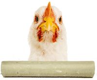 rouleaux de poulet pour chien en batônnet