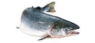 acide gras essentiel huile de saumon
