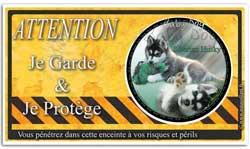 un jeune chiot husky sur une plaque attention au chien
