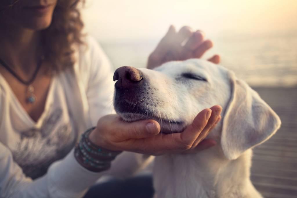 Un vétérinaire caresse un chien pour le rassurer avant les soins